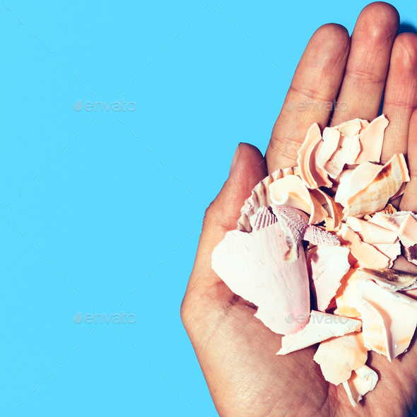Fragments shell in the hand Minimal art design - Stock Photo - Images