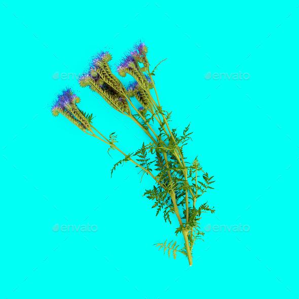 Wild flower on blue background. minimal style - Stock Photo - Images