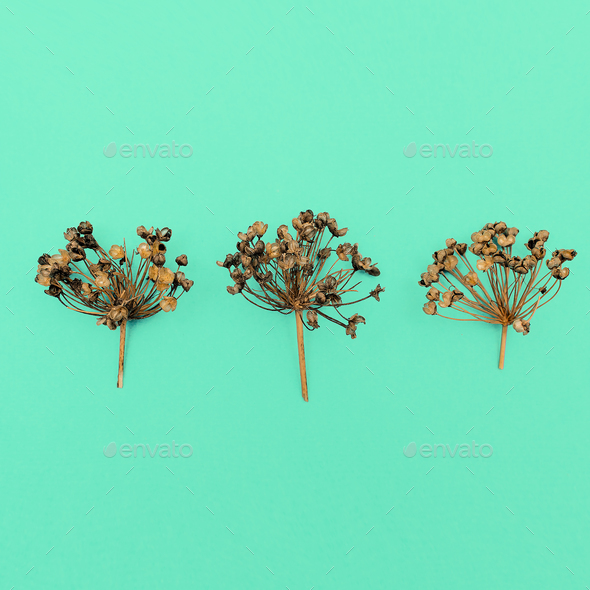 Dried herbs Herbarium Minimal style - Stock Photo - Images