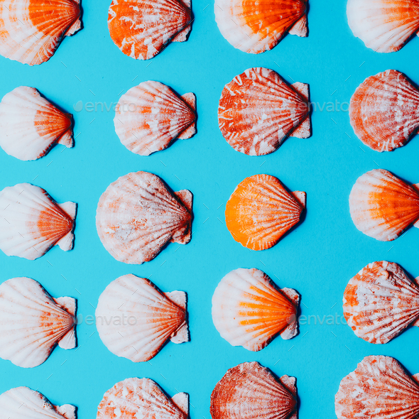 Background shells Minimal style art - Stock Photo - Images