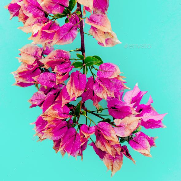 Tropical flowers. Minimal art design Fuchsia - Stock Photo - Images