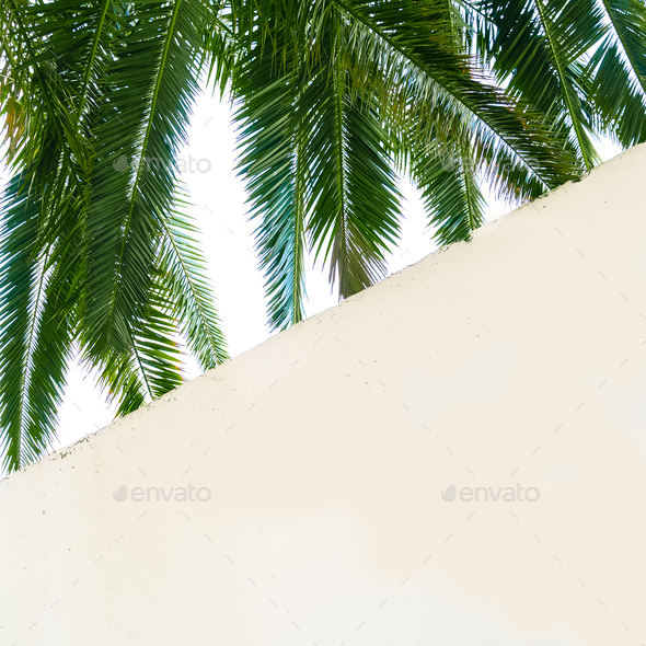 Green palm and white wall. Stylish minimal background. - Stock Photo - Images