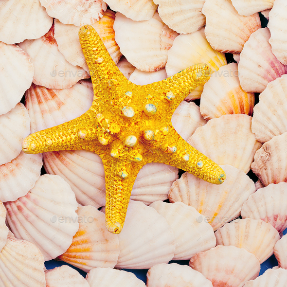 Starfish. Sea mood. Minimal art - Stock Photo - Images