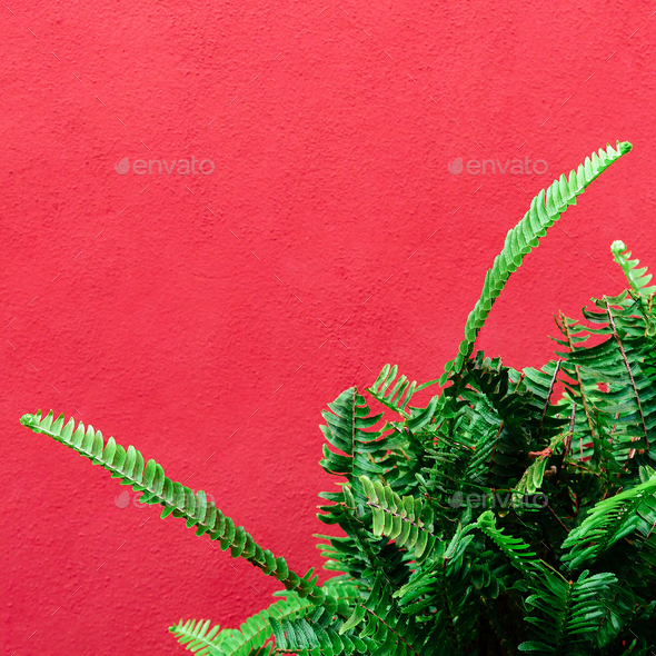 Plant on pink. Tropical Greens minimal art design - Stock Photo - Images