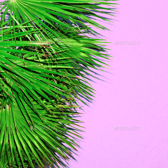 Palm tree on the pink. Minimal fashion design - Stock Photo - Images