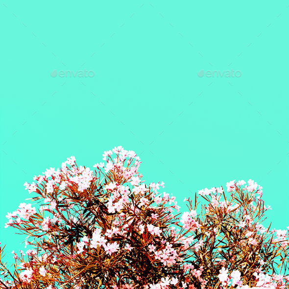 Blooming flowers Minimal Style - Stock Photo - Images