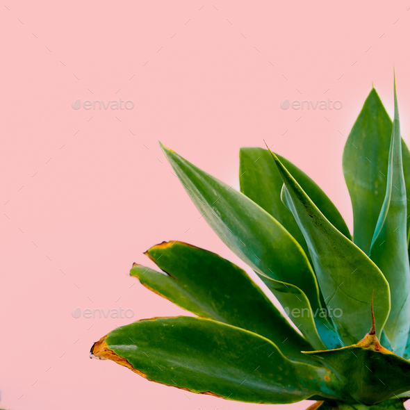 Outdoors. Minimal design. Green plant on a pink wall. Fashion pr - Stock Photo - Images