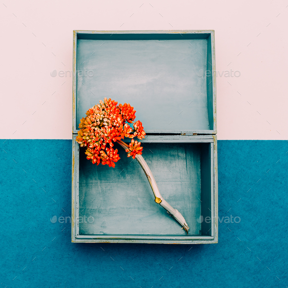 Flower in the box. Minimal design art - Stock Photo - Images