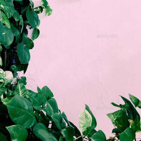 Plant on pink. Stylish green minimal art - Stock Photo - Images