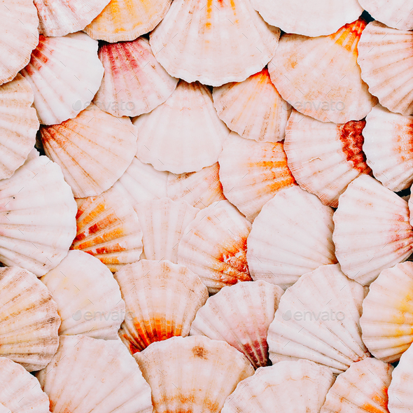 Seashells background. Ocean mood. Minimal art - Stock Photo - Images