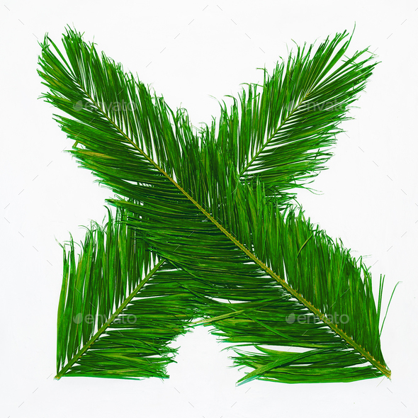 Palm leaves on a white background. Minimal design art - Stock Photo - Images