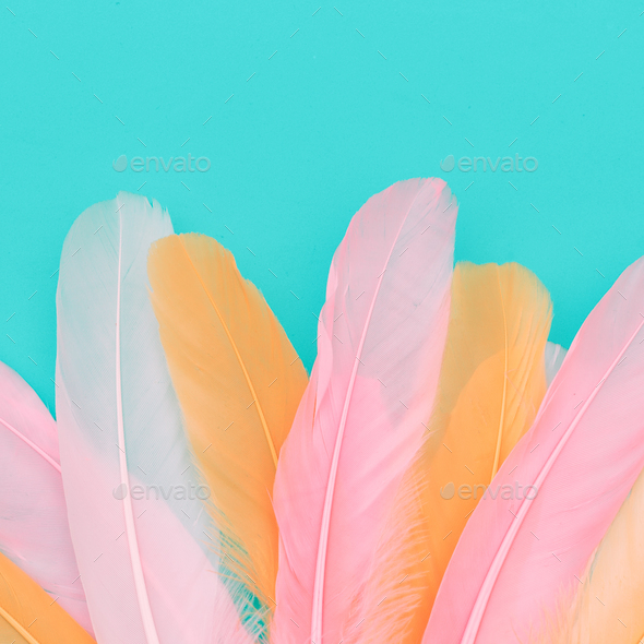 Minimal candy feathers background art gallery - Stock Photo - Images