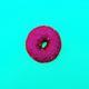 Fashion Donut in glitter Minimal Art Still Life Details - PhotoDune Item for Sale