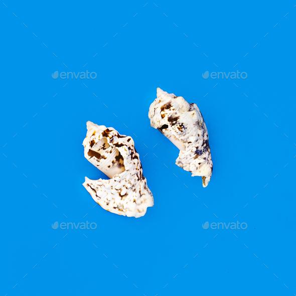 White seashells on blue background Art minimal design - Stock Photo - Images