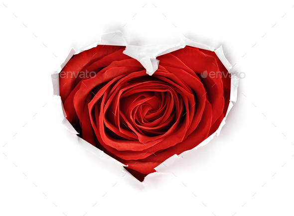 Heart shape hole with valentines day red rose through paper - Stock Photo - Images