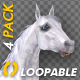 White Horse - Gallop Loop - Pack of 4 - VideoHive Item for Sale