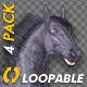 Black Horse - Gallop Loop - Pack of 4 - VideoHive Item for Sale