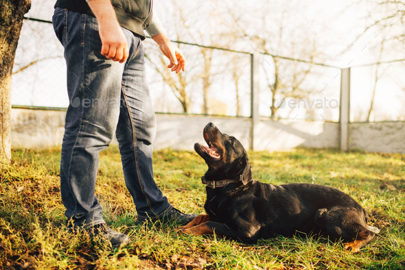 Male cynologist with service dog, training outside - Stock Photo - Images