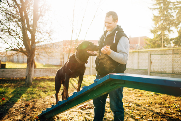 Cynologist trains a dog to keep balance - Stock Photo - Images