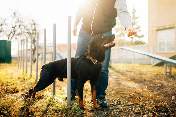 Cynologist with sniffing dog, training outside - Stock Photo - Images