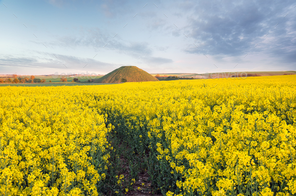 Silbury Hill - Stock Photo - Images