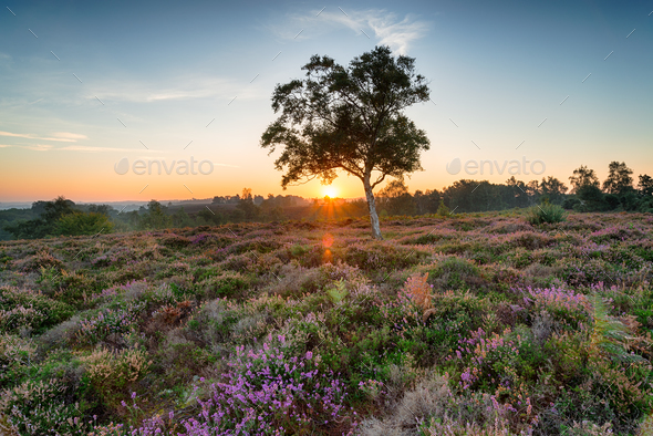 New Forest Sunrise - Stock Photo - Images