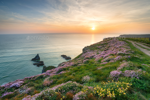 Wild Flowers on Cornish Cliffs - Stock Photo - Images
