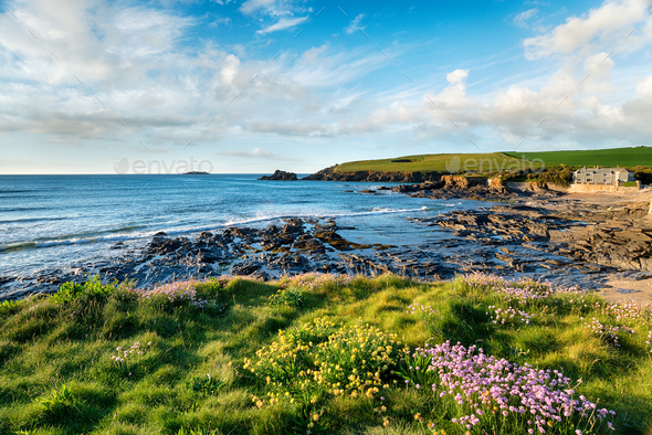 Summer at Trevone in Cornwall - Stock Photo - Images