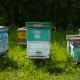 Bee Apiary at the Edge of the Forest - VideoHive Item for Sale
