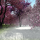 Time Lapse Spring Forest - VideoHive Item for Sale