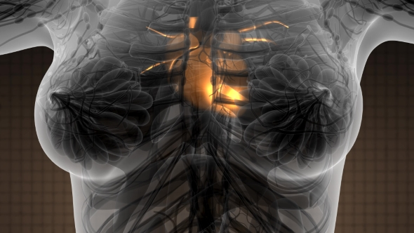 Anatomy Scan Of Human Heart By Icetray Videohive