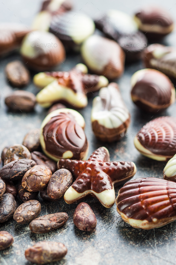 Sweet chocolate seashells. - Stock Photo - Images