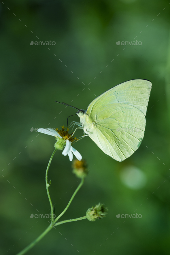 Close up of butterfly in the nature - Stock Photo - Images