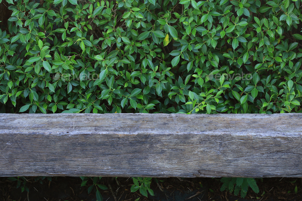 Old wooden bench with green leaf background - Stock Photo - Images