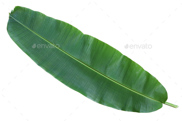 Fresh whole banana leaf - Stock Photo - Images