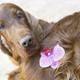 Cute dog nose - PhotoDune Item for Sale