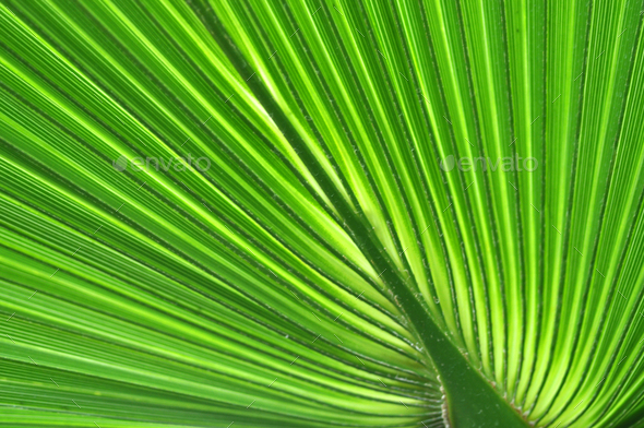 Pattern of a green palm leaf close-up - Stock Photo - Images