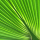Pattern of a green palm leaf close-up - PhotoDune Item for Sale