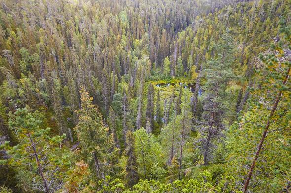 Finland forest and lake at Pieni Karhunkierros trail. Autumn season.  - Stock Photo - Images