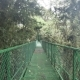 Walking on Hanging Bridge at Natural Rainforest in Costa Rica - VideoHive Item for Sale