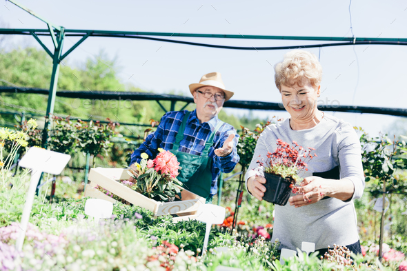 Senior couple picking plants in a garden center. - Stock Photo - Images