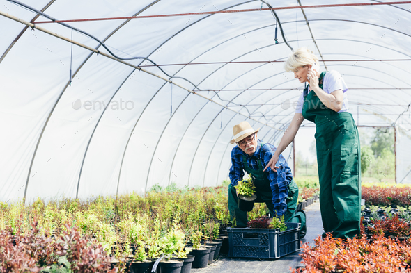 Senior people picking the flowers. - Stock Photo - Images