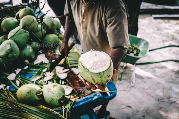 Man handing in a green coconut. Traditional local agriculture. - Stock Photo - Images