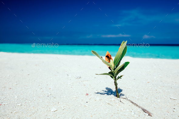 Green plant standing in the beach sand. - Stock Photo - Images