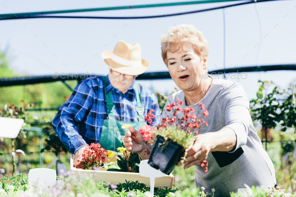 Elderly couple picking the flowers - Stock Photo - Images