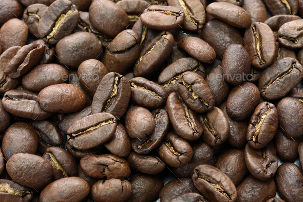 kopi luwak - Stock Photo - Images