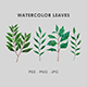 Watercolor Leaves - GraphicRiver Item for Sale
