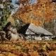 Rural Landscape in Autumn Straw Near the Barn Yellow Leaves in Sunlight. Shooting in Motion with - VideoHive Item for Sale