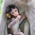 Close-up of a cute baby monkey - PhotoDune Item for Sale
