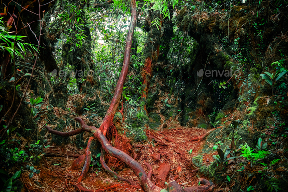 Surreal colors of fantasy landscape at mystical tropical mossy forest  - Stock Photo - Images